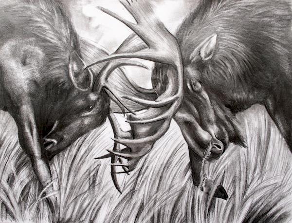 mykkanen - moose drawing